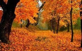 """""""I colori dell'autunno - weekend trekking nella Valle del Vanoi"""""""