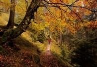 Colori e sapori d'autunno